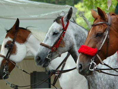 Horses Paraded Before the Race, Saratoga Springs, New York, USA-Lisa S^ Engelbrecht-Photographic Print