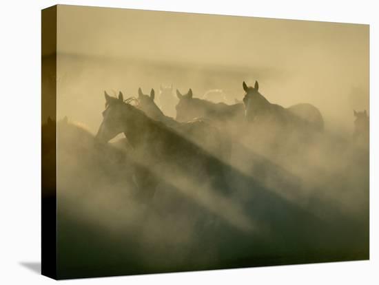 Horses Run Home-Sisse Brimberg-Stretched Canvas Print