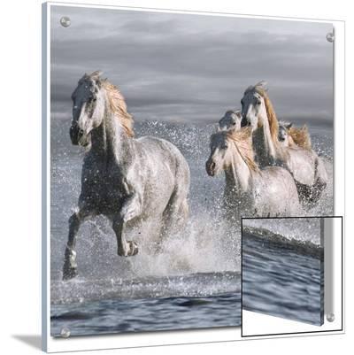 Horses Running at the Beach- Llovet-Art on Acrylic