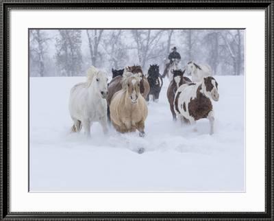Horses Running Through Snow Hideout Ranch Shell Wyoming Photographic Print Darrell Gulin Art Com