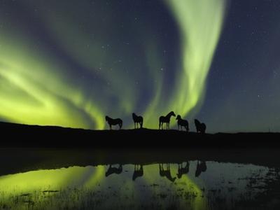 Horses under the Aurora Borealis