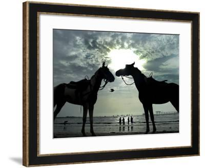 Horses, Used for Joyrides, Stand on the Beach--Framed Photographic Print