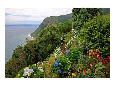 Hortensias and torch lilies on a steep slope near Nordeste, Sao Miguel Island, Azores, Portugal--Art Print