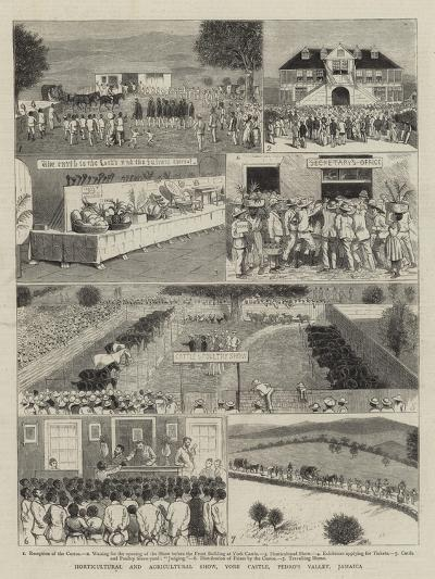 Horticultural and Agricultural Show, York Castle, Pedro's Valley, Jamaica--Giclee Print