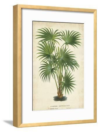 Palm of the Tropics IV