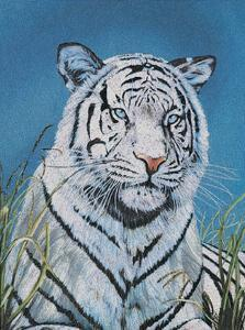 Tiger in Wild by Hoss