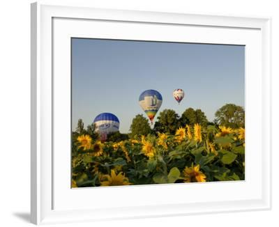 Hot Air Ballooning over Fields of Sunflowers in the Early Morning, Charente, France, Europe-Groenendijk Peter-Framed Photographic Print