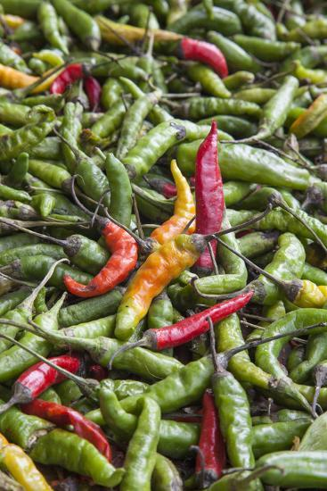 Hot Peppers of Various Color Used as Food in Indian Cuisine-Roberto Moiola-Photographic Print