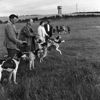 Hound Trailing, One of Cumbrias Oldest and Most Popular Sports, Keswick, 2nd July 1962-Michael Walters-Photographic Print