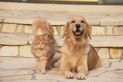 House Cat and Golden Retriever-DLILLC-Photographic Print