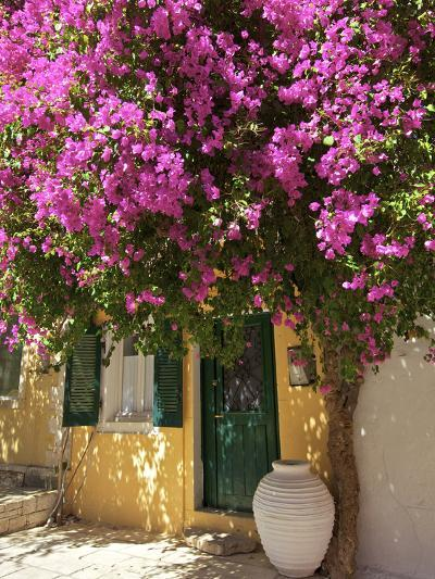 House Covered in Bougainvillea, Paxos, the Ionian Islands, Greek Islands, Greece, Europe-Neil Farrin-Photographic Print