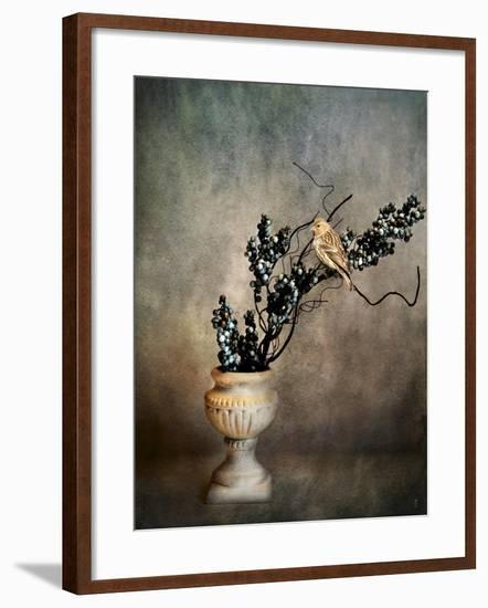 House Finch and Berries-Jai Johnson-Framed Giclee Print
