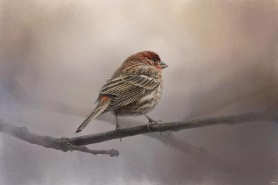 House Finch in January-Jai Johnson-Giclee Print