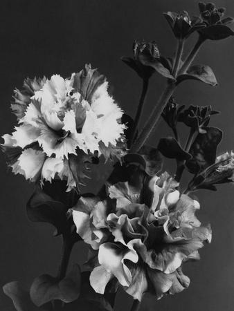 https://imgc.artprintimages.com/img/print/house-garden-december-1935_u-l-pepihs0.jpg?p=0