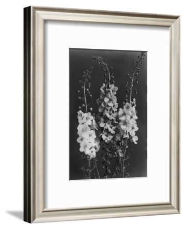 House & Garden - February 1940-J. Horace McFarland-Framed Premium Photographic Print