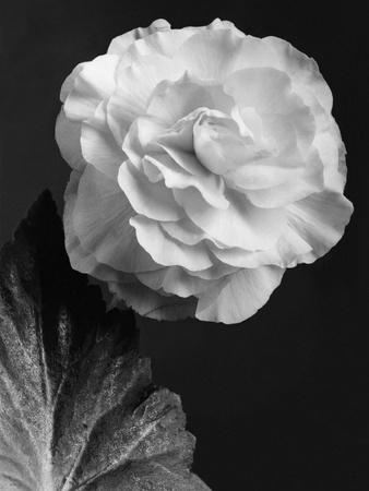 House & Garden - February 1944-J. Horace McFarland-Premium Photographic Print