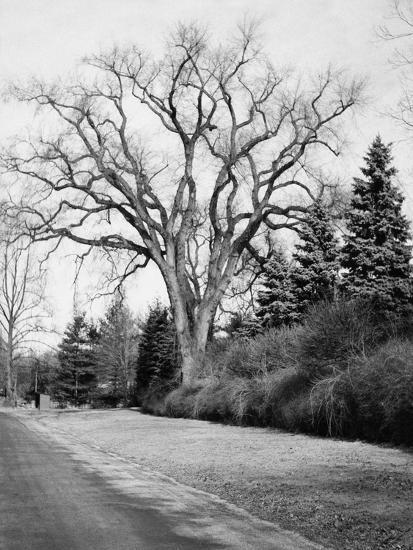 House & Garden - January 1945-Tom Leonard-Premium Photographic Print