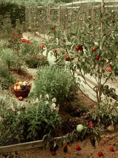 House & Garden - January 1956-Andr? Kert?sz-Premium Photographic Print