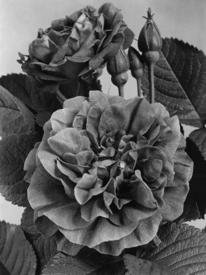 House & Garden - May 1940-J. Horace McFarland-Premium Photographic Print