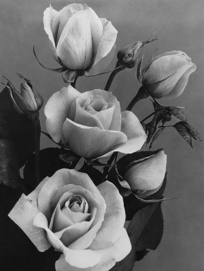 House & Garden - October 1934-J. Horace McFarland-Premium Photographic Print