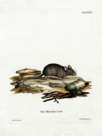 House Mouse--Giclee Print