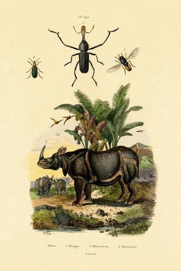 Hoverfly, 1833-39--Giclee Print