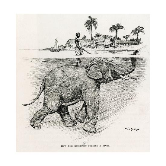 How the Elephant Crosses a River-W.H. Drake-Giclee Print