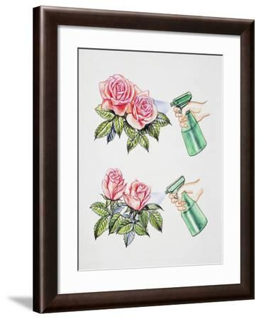 How to Spray Water or Pesticides on Flowers--Framed Giclee Print