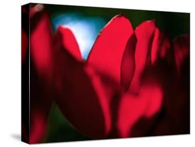 Crimson Petals by Howard Ruby