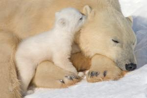 Cub Whispering to Mother by Howard Ruby