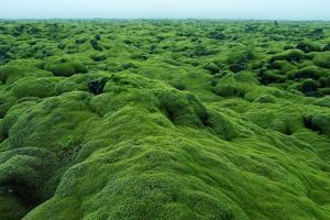 Field of Moss by Howard Ruby