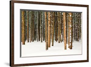 Lodge Poles by Howard Ruby