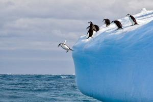 Penguins Off the Edge by Howard Ruby