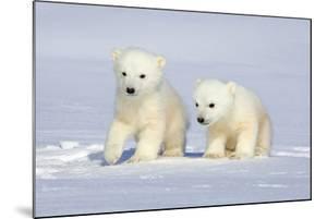 Polar Bear Twins by Howard Ruby