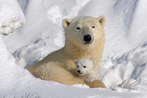 Protective Mother and Cub by Howard Ruby