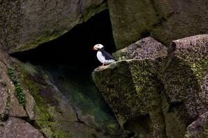 Puffin Cave by Howard Ruby