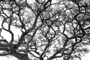 Tree Vine by Howard Ruby