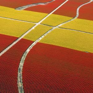 Tulip Roads by Howard Ruby