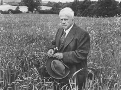 American Poet, Robert Frost Standing in Meadow During Visit to the Gloucester Area of England
