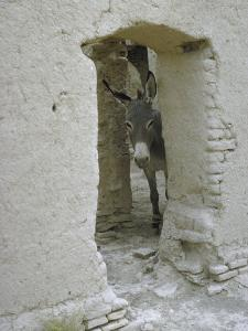 Donkey Peering Through Open Passage Way in White-Washed Wall in Ruined City by Howard Sochurek