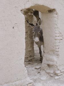 Russian Look of the Land Essay: Donkey Peering Out of Doorway at Merv by Howard Sochurek