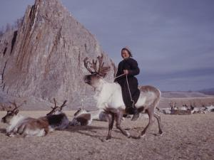 Woman Riding One of Her Reindeer in Outer Mongolia by Howard Sochurek
