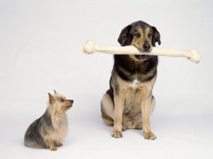 Big Dog with Extra Large Bone and Little Dog by Howard Sokol