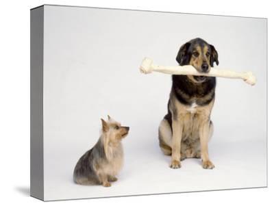 Big Dog with Extra Large Bone and Little Dog