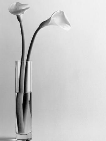 Calla Lilies in Vase by Howard Sokol