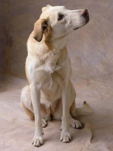 Dog by Howard Sokol