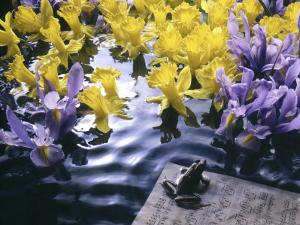 Frog, Sheet Music and Flowers in Water by Howard Sokol