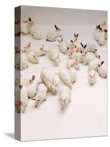 Group of Rabbits by Howard Sokol