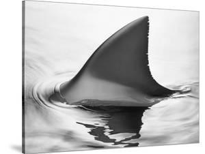 Shark Fin by Howard Sokol