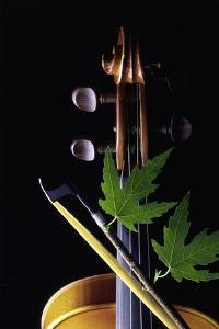 Violin with Maple Twig by Howard Sokol
